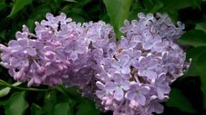 flower-375720__180