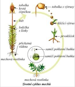 životní cyklus mechů